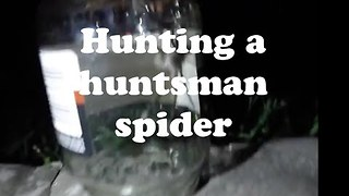 Couple Remove Huge Spider From Their Bedroom With Great Difficulty - Video