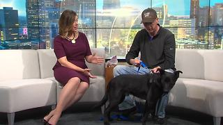Pet of the Week: Preston - Video