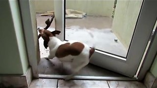 Dog having some stick trouble! || Viral Video UK