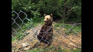 Bear Orphanage - Video