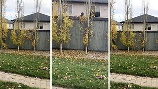 Petty neighbour throws leaves over fence in argument - Video