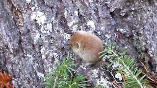 Cool forest mouse