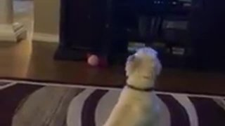 Trio Of Dogs Howls During A Classic Canine Movie