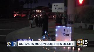Activists hold vigil for Bodie, Dolphinaris dolphin who died last month - Video