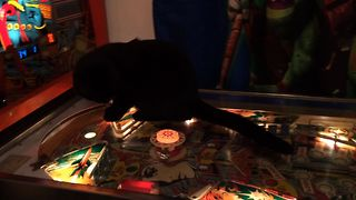 Pinball Kitty Cat