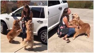 Dogs get super excited to see their owner again