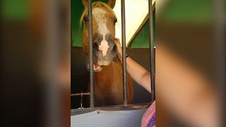 Horse Loves A Good Scratch - Video
