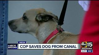 Mesa officer saves dog from canal - Video