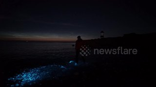 Rare and beautiful bioluminescence on a beach in north Wales - Video
