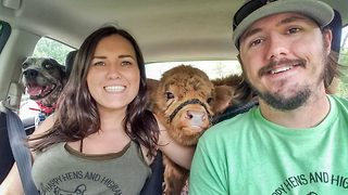 Adorable highland calf rejected by herd saved by couple who raised it indoors - Video