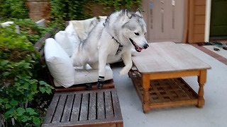 Endless Husky Energy - Video
