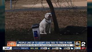 Multiple adoption applications for abandoned dog tied to tree and left in Patterson Park - Video