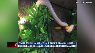 Detectives searching for thief who stole guns, cash and rare snake - Video