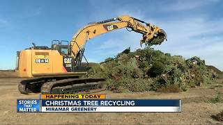 Christmas tree recycling available - Video