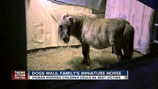 Dogs maul family's miniature horse - Video