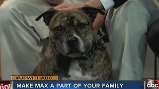 Meet Max, 11/26 Rescues in Action superstar - Video