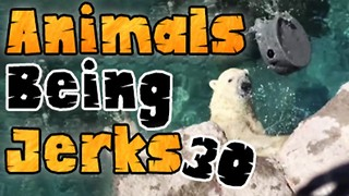 Animals Being Jerks #30 - Video