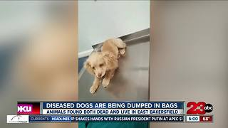 Dogs dumped in East Bakersfield dead and alive - Video