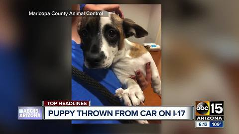 Puppy rescued after it was tossed from a car on the I-17