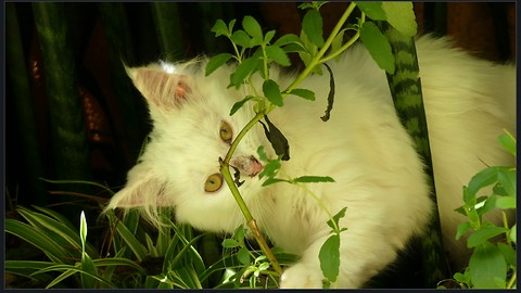 Why Do Cats Eat Grass: Twin Cats Played with Plants and Eats Some Grass