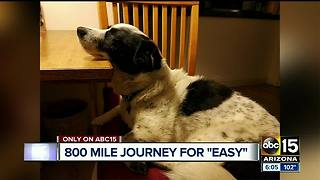 Woman travels 800 miles searching for missing dog, last scene near Globe - Video
