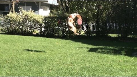 Check out this dog's frisbee-catching highlight reel