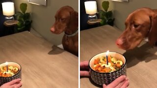 Clever dog successfully blows out her birthday candle
