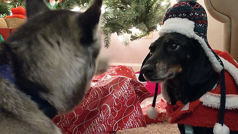 Excited dogs open all their own Christmas presents