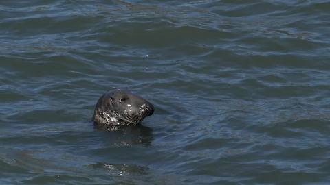 Seal Spotted Near Agatha Christie's Favourite Bathing Spots