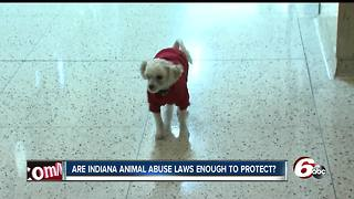 Animal rights advocates say not enough is being done to prosecute those who abuse pets - Video