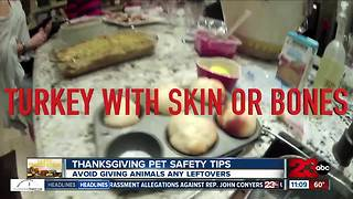 Thanksgiving pet safety tips - Video