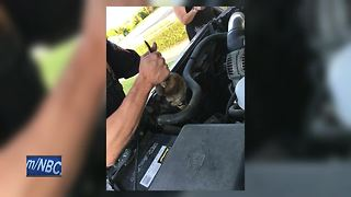 Omro Police find Ball Python in car - Video