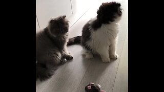 Cute cats play with mechanical toy mouse