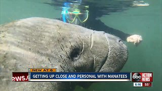 Citrus County is the only place in the U.S. where you can swim with and touch manatees