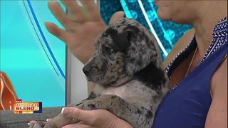 Gulf Coast Humane Society: Stitch - Video