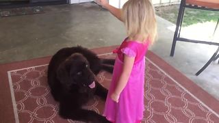 Watch this little girl train her huge puppy - Video