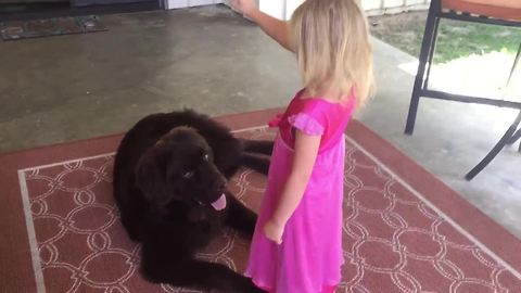 Watch this little girl train her huge puppy