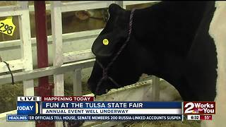 Lawton family showcasing cattle at Tulsa State Fair - Video