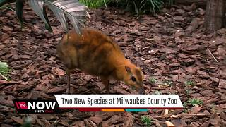 Milwaukee County Zoo welcomes three new animals - Video