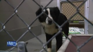More than 30 dogs, parrot seized from home in Brown County