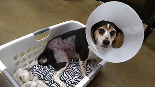 Family searching for dog who attacked beagle - Video