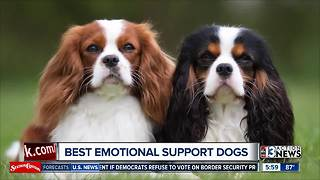 Best emotional support animals - Video