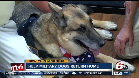 Fundraiser Helps Bring Retired Military Dogs Back Home