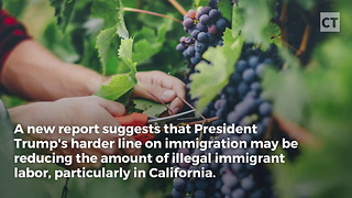 California Suffering From Trump Immigration Crackdown