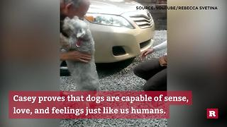 Dog passes out over joyful reunion with owner | Rare Animals - Video