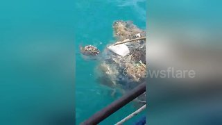 Heartwarming moment stranded turtle is rescued while trapped in fisherman's net