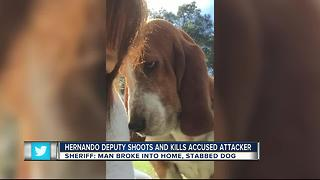 Hernando deputy shoots, kills man after stabbing dog - Video