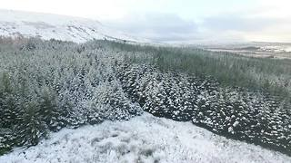 Northern Ireland forest turns white with snow