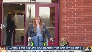 Service dog from Cecil County honored for excellence - Video