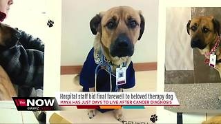 Hospital staff bids farewell to beloved therapy dog - Video